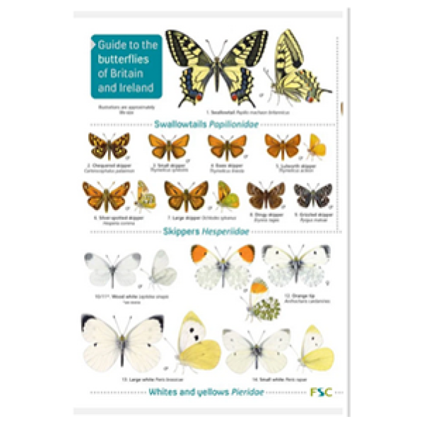 Butterflies of Britain and Ireland (2nd Ed)