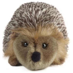 Medium Hedgehog