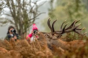 Wild Deer - Warning - News