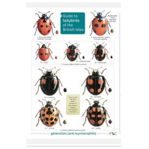 Ladybirds of the British Isles